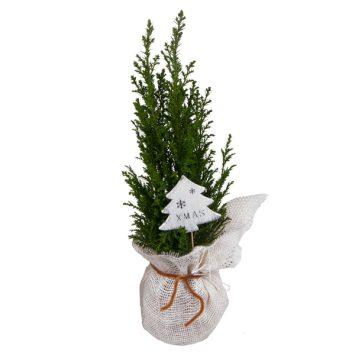 Árbol decorado de Navidad