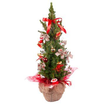 Árbol de Navidad (Picea)