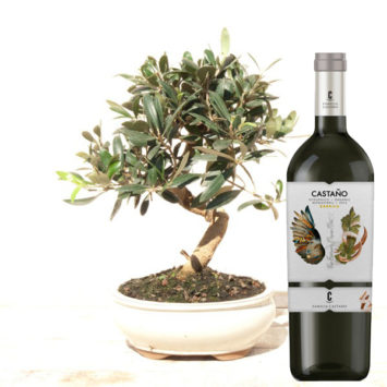 Bonsái olivo y vino tinto