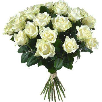 Rosas Premiun Blancas