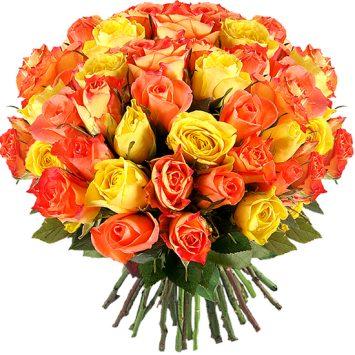 Rosas du soleil