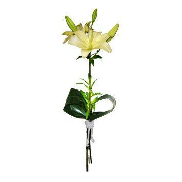 Lilium adornado