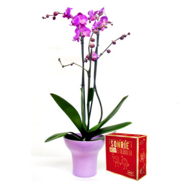 Planta orquídea fucsia y bombones