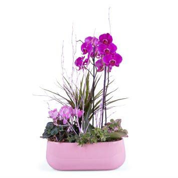 Centro de plantas en tonos rosas - Envío de Flores a Domicilio