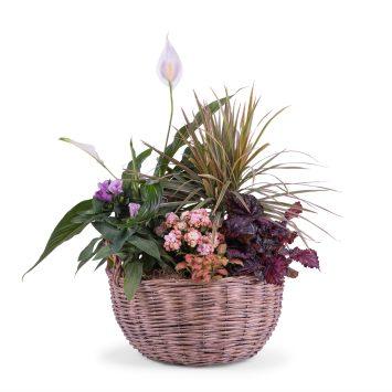 Centro de Plantas Variado - Envío de Flores a Domicilio
