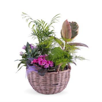 Centro de plantas - Envío de Flores a Domicilio