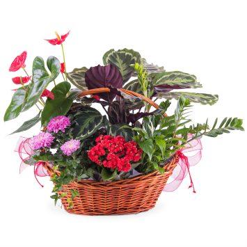Centro de plantas Premium - Envío de Flores a Domicilio