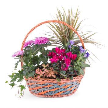 Cesta de Plantas - Equinoccio - Envío de Flores a Domicilio
