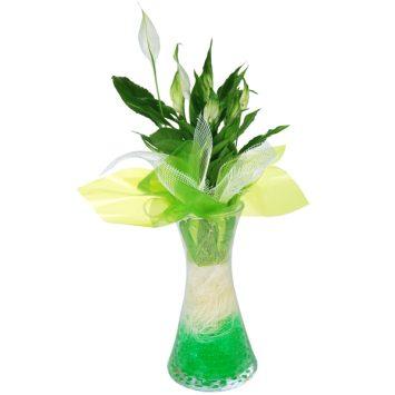 Planta spatifilium con jarrón de cristal