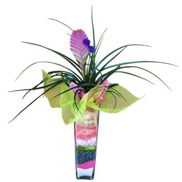 Planta tilansia con cristal decorado