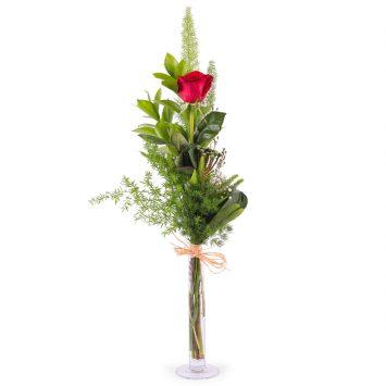 1 Rosa Roja de Tallo Largo - Envío de Flores a Domicilio