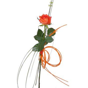 Rosa naranja ecológica