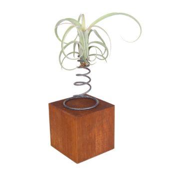 Tillandsia con cubo de madera
