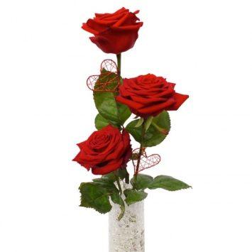 Enviar el Trío de Rosas Rojas a domicilio