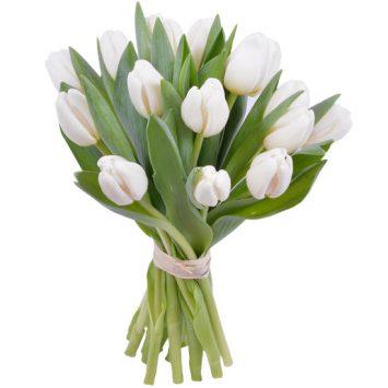 Tulipanes Acendrado