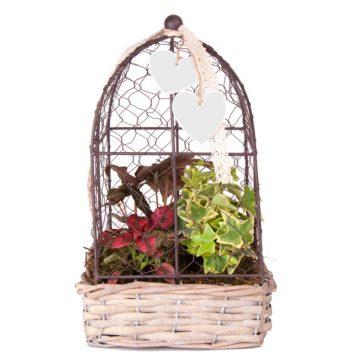 Jaula con plantas